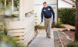 Pest Control Solutions For All Kinds Of Pest Problems